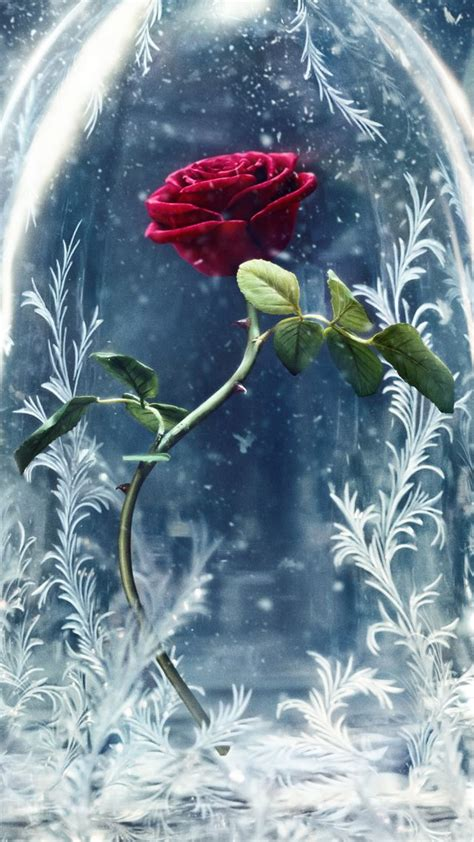 Wallpaper Beauty and the Beast, glass, rose, best movies